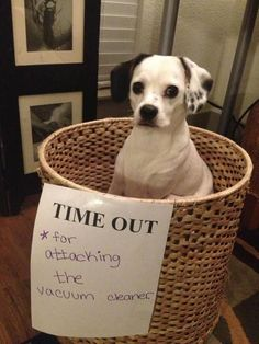 cute little criminal. my dog would have been eating that basket. And mine would still be trying to eat the vacuum