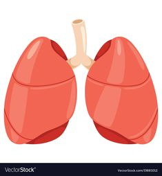 Lungs vector image on VectorStock Stomach Images, Lung Anatomy, Page Decoration, Picture Composition, Cute Easy Drawings, Blue Nose Friends, Dramatic Play, Teaching Science, Learning Centers