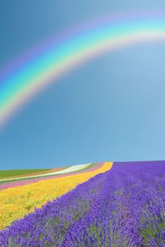 .Beautiful Rainbow, over lavender. Beautiful Nature