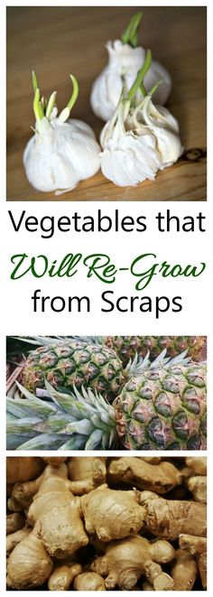 Regrow your food from kitchen scraps. Many veggies will do this.