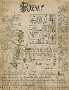 Magic plant knowledge has a long history and has a place in the modern witches Book of Shadows. Book of Shadows page. Rosemary Magic plant knowledge has a long history an Witchcraft Books, Green Witchcraft, Wiccan Spells, Magick, Witchcraft Herbs, Magic Spells, Magic Herbs, Herbal Magic, Libros Pop-up