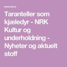 Taranteller som kjæledyr - NRK Kultur og underholdning - Nyheter og aktuelt stoff