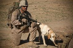 U.S. Marine Corps Lance Cpl. Juan Lopez and his military working dog Cabella, provide security during a patrol in Shoshorak, Helmand province, Afghanistan, March 23, 2011, during Operation Watchtower II. The goal of the operation was to remove Taliban forces from the area (above).