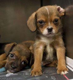 Unbelievable Pair of pups... so very cute