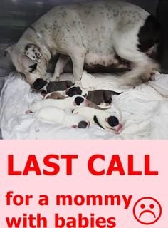 RESCUED!❤️❤️❤️!!  /A1734940 American bulldog mom and babies need help ASAP located at Miami Dade https://www.facebook.com/urgentdogsofmiami/photos/pb.191859757515102.-2207520000.1446242288./1068880039813065/?type=3&theater