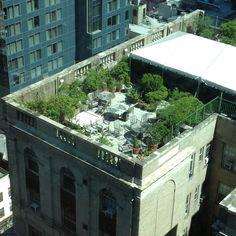 Rooftop Garden2 - NYC