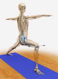 Hotornotviral: Preventing Yoga Injuries vs Preventing Yoga, Part III: Joint Mobility, Stability and Proprioception