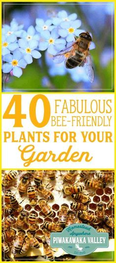 Honey bees are facing extinction. There are some things we can do to help ensure their survival. Having a garden full of bee friendly plants is one of them. Here are 40 fabulous plants to get you started with planing a bee friendly garden. #bees #keepingbees #gardening #sustainability #homesteading #beekeeping
