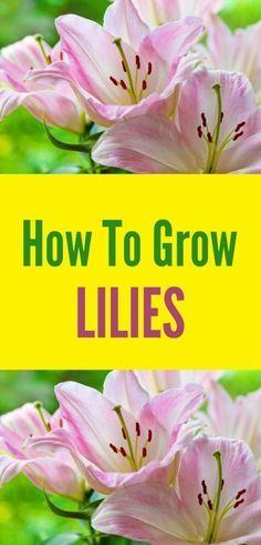 Learn how to grow li