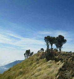 Mt. Merbabu, via selo boyolali, central java, indonesian