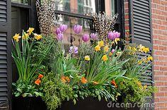 Elegant window box in Beacon Hill, Boston