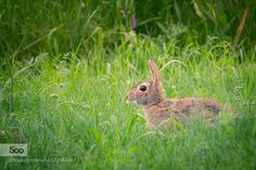 Rabbit by mapf888. Please Like http://fb.me/go4photos and Follow @go4fotos Thank You. :-)