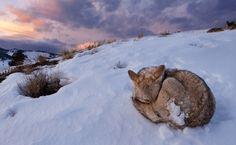 Las mejores #fotografías de invierno, y trucos para hacer mejores capturas.