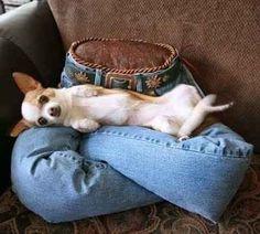Possivelmente o melhor uso já visto para calças jeans velhas: um travesseiro colinho.