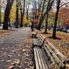 Beautiful Autumn in Portland's Park Blocks.