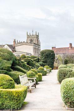Shakespeare's New Place Garden in Stratford-upon-Avon, England has amazing hedges. #england #garden #stratforduponavon