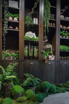 These plants look amazing against the dark wood.  Recreate this look with dark flooring, such as our Jacobean Oak.