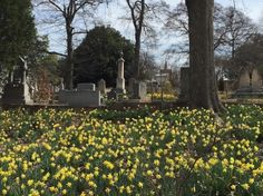 Spring has sprung at Oakland Cemetery in Atlanta. Photos courtesy of Ben Young.