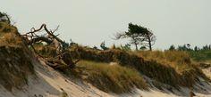 Darßer Weststrand