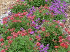 butterfly garden - Florida Butterfly Garden