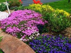 Beautiful ground covers