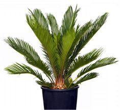 Cactus Plants, Garden, Random, Exotic Plants, Garten, Cacti, Lawn And Garden, Cactus, Gardens