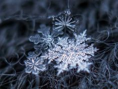 Fotografias snowflakes http://www.designals.net/2013/11/fotografias-de-copos-de-nieve-por-alexey-kljatov/