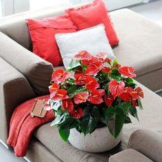 11 Φυτά Εσωτερικού Χώρου που Δε Χρειάζονται Φως για να Επιβιώσουν! Indoor Plants, Throw Pillows, Table Decorations, Flowers, Zen Gardens, Balcony Ideas, Gardening, Home Decor, Inside Plants