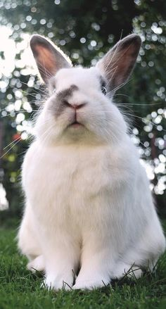 cuteness alert! Bunny