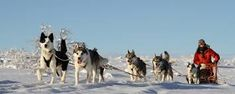 Image result for sled dogs asgard finland
