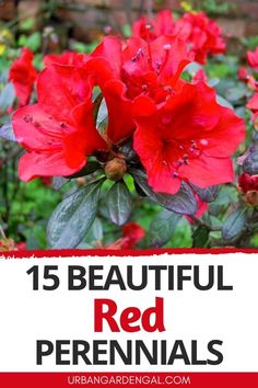 Red perennial flowers create beautiful pops of color in the garden. Here are 15 bright red perennials to plant in your flower garden. #perennials #flowers #flowergarden Red Perennials, Garden Stand, Red Flowers, Color Pop, Bloom, Green, Plants, Outdoors, Gardening