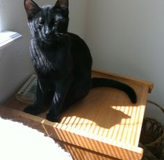 Black cat and my shadow ♫     ~ (my little Monkey)