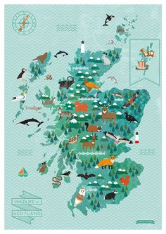 A charming illustrated map of the Wildlife of Scotland - Kate McLelland Illustration  The map is available for sale here: http://www.edinburghart.com/shop-2/new-wildlife-of-scotland-map/