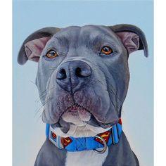 "A portrait I painted in 2015, this is ""Bexley"", 110 x 13"", oil on canvas, jamesrubyworks.com #dogportrait #dog #artgallery #cle #clevelandartist #cleveland #pitbull #pitbullsofinstagram #superman #oilpainting #winsorandnewton #blickartmaterials #dogcollar"