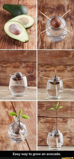 Easy way to grow an avocado.