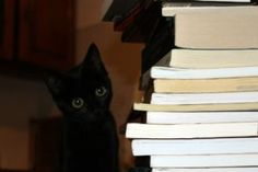 minimalizm ile ilgili kitaplar