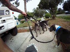 Porque recomendo Treino Positivo para o Adestramento de Cães? Minha Opinião Pit Bull, Top Imagem, Memes, Dogs, Meme Guy, Creative, Google, Puppy Trainer, Animals