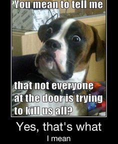 This is my dogs reaction to everybody- I can relate to this