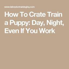How Do You Potty Train A Deaf Dog