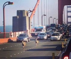 Saturday, Sep 6, 2014 ~ meanwhile on the Golden Gate Bridge S.F....lol