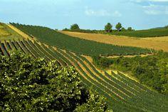 Vineyards, photo by Martin Candir
