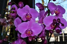 purple orchids - creating a health indoors with plants
