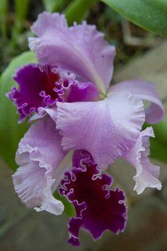 PURPLE ORCHIDS ~ AMAZING PURPLE COLORS!!