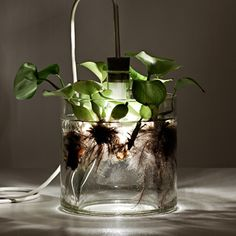 Miriam Aust's vase and lamp design is sensational! The combination of a translucent glass vase filled with aquatic plants and converted into a table lamp is unique. Light Table, A Table, Unique Table Lamps, Translucent Glass, Clear Glass, Plant Lighting, Lamp Design, Lighting Design, Lighting Concepts