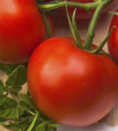 This year, grow your best tomatoes ever, with our top 10 tips.