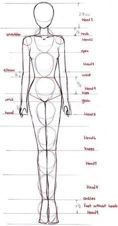 Новости - drawing the human body, proportions.