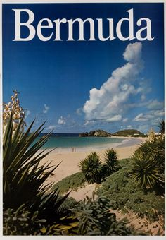 Depicts Bermuda Island Beach [Horseshoe Bay] with Spanish bayonets.