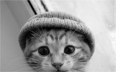 This was just too cute to pass up. I mean a cat in a beanie? Come on...