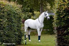 Dutch Horse Photography