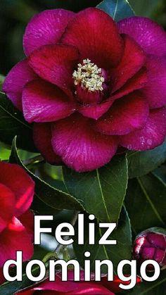 Bom dia - Marly Gomes Dos Santos - Google+